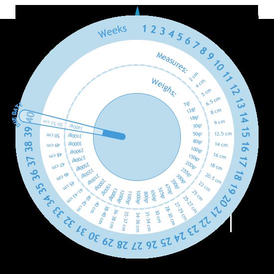 Pregnancy Management | Gestogram | Pregnancy Calculator