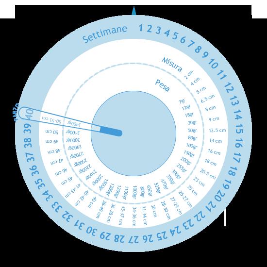 Calendario Della Gravidanza Calcolo.Ruota Della Gravidanza Gestogramma Regolo Ostetrico