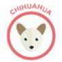 dog-chihuahua