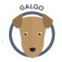 dog-galgo