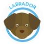 dog-labrador