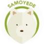 dog-samoyedo