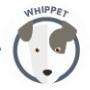 dog-whippet