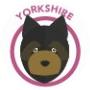 dog-yorkshire