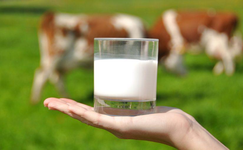 cuantas calorias tiene la leche entera de vaca