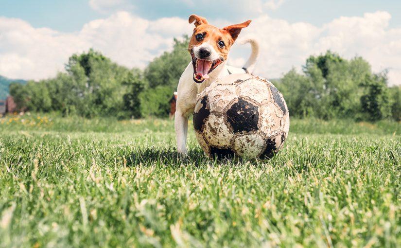 Tamaño reglamentario del balón de fútbol