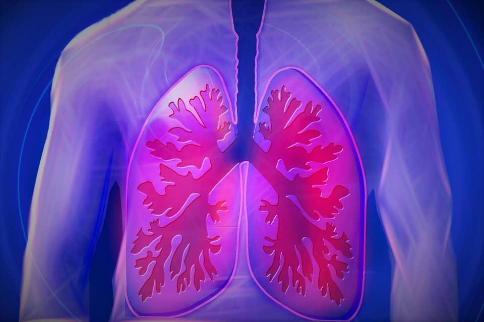 Cuántos pulmones tienen las personas