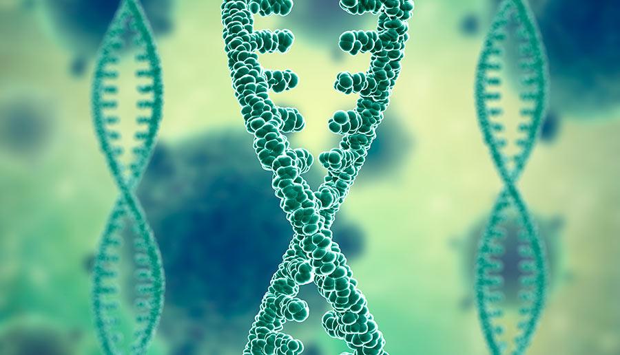 Número de cromosomas del espermatozoide