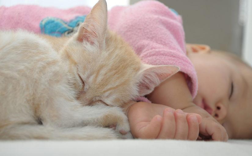 Cuántos Años Viven Los Gatos Esperanza De Vida De Los Gatos