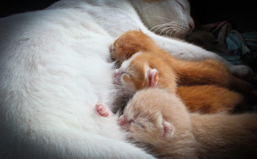 Cantidad de cromosomas de los gatos