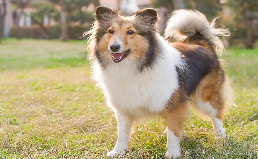 Cuántas Razas De Perros Hay Número De Razas De Perros