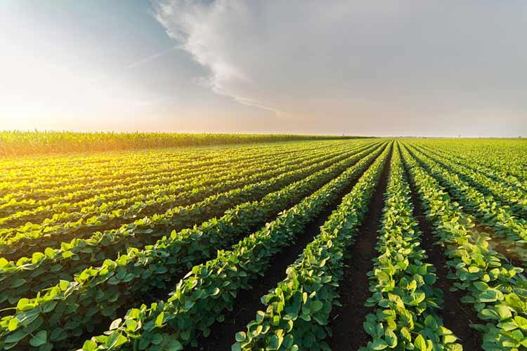 cuantos tipos de agricultura hay