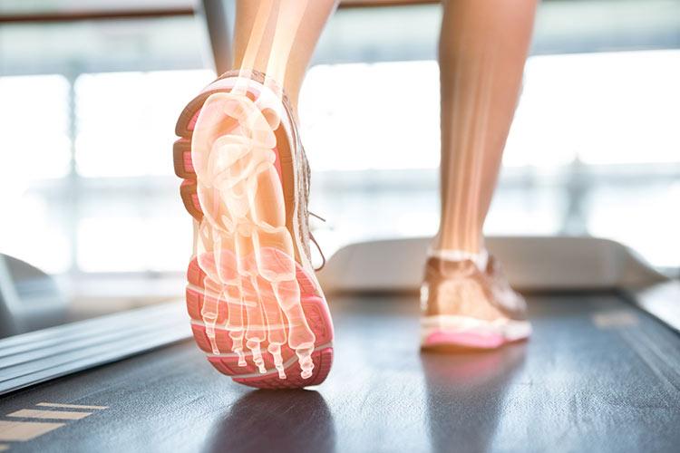 cuantos huesos hay en el pie