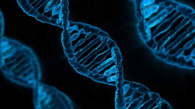 Número de cromosomas de las células
