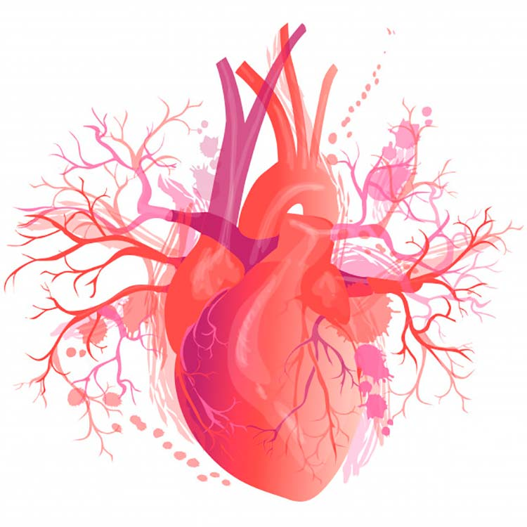 cuantas venas tenemos en el cuerpo humano