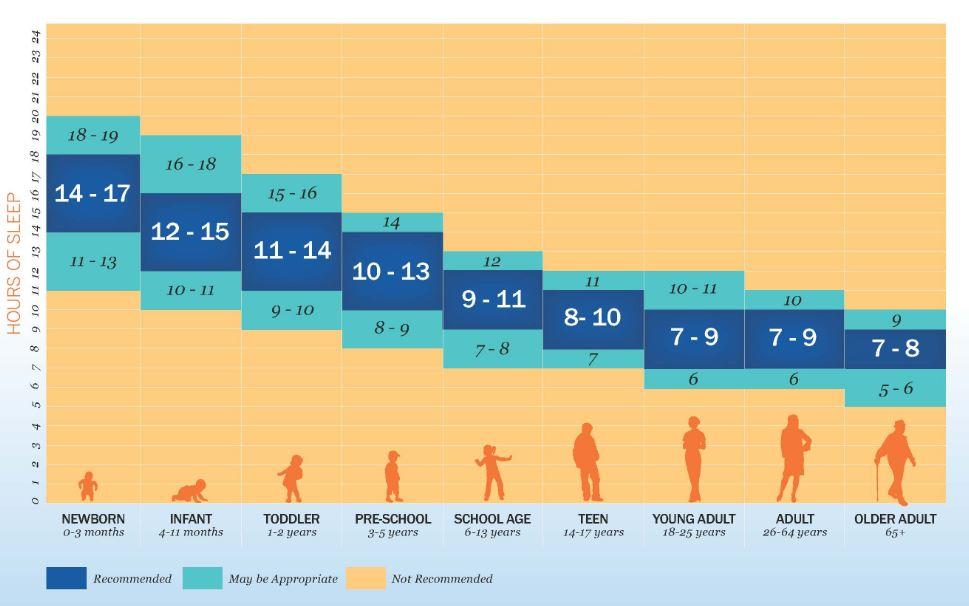 ¿Cuántas horas de sueño necesita un adulto?